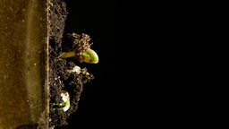 Plant growth Stock Video Footage