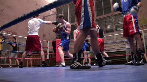 Training of boxers Stock Video Footage