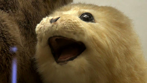 A stuffed animal Stock Video Footage