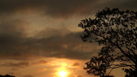 The tree against the sky Stock Video Footage