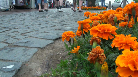 A bed of orange flowers Stock Video Footage