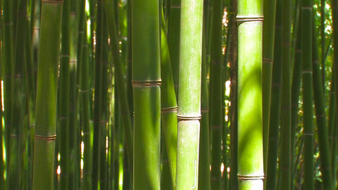Bamboo Stalks Live Action