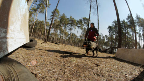 The owner trains the dog on a makeshift platform in the forest Footage