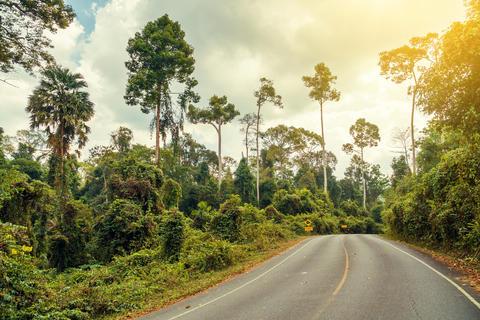 Road crossing Khao Yai National Park Fotografía
