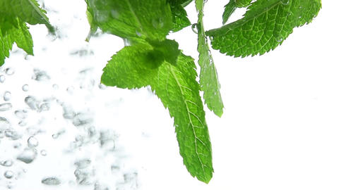Close up fresh green mint leaves floating in water Footage