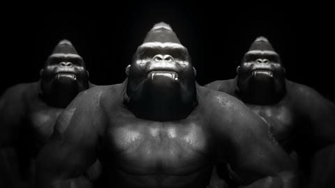 Gorilla Animal Ape Brotherhood Black Background Full HD VJ Loop Animation