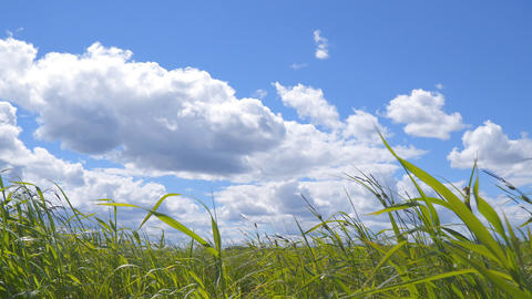 Grass in wind under the beautiful cloudy sky Footage