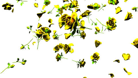 Falling Yellow Roses On White Background CG動画