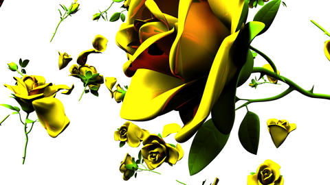 Falling Yellow Roses On White Background Animation