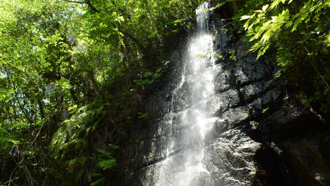Fix:The sun that passed through the trees illuminates the falls that slide down ビデオ