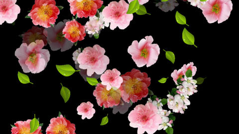 FLOATING FLOWERS CG動画