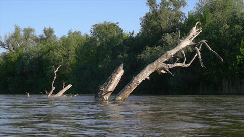 Dead tree in the river time-lapse Footage