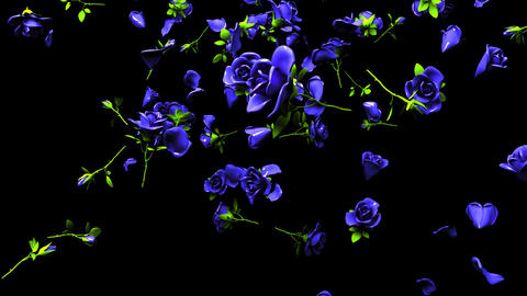 Falling Blue Roses On Black Background Animation