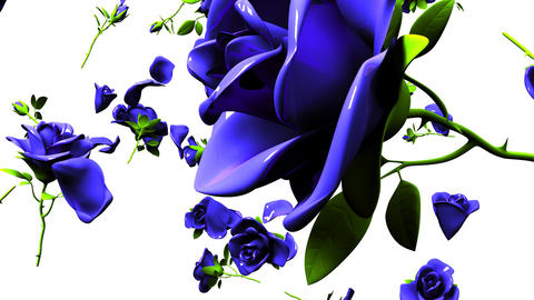 Falling Blue Roses On White Background CG動画