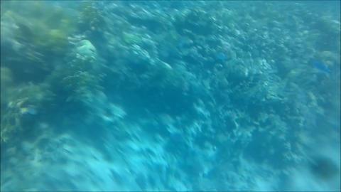 Coral Reef Diving 0