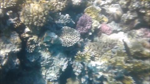 Coral Reef Diving 1