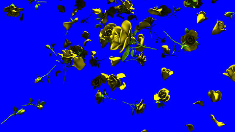 Falling Yellow Roses On Blue Chroma Key CG動画