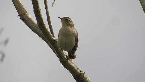 Nature fauna ave bird Live Action