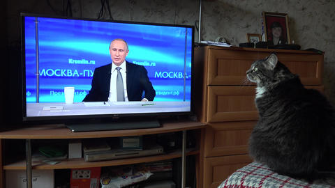 The cat looks at the Russian President Vladimir Putin on TV. 4K Footage