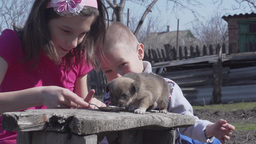 Slow Motion children playing with a puppy Footage