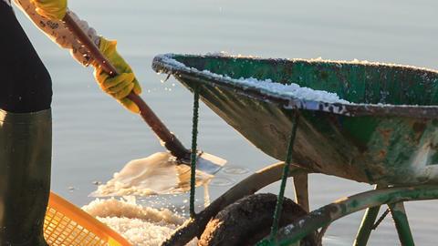 Closeup Man Fills Salt with Basket into Wheelbarrow Footage