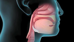 Animation of oxygen consumption with oral and nasal breathing Footage