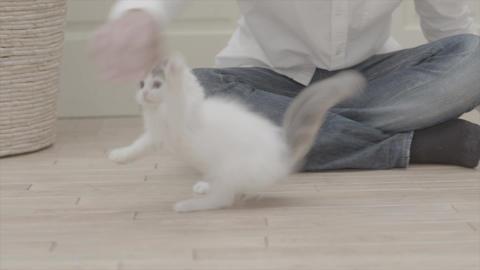 Neko11 Footage