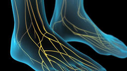 Medical animation of the human nervous system Footage