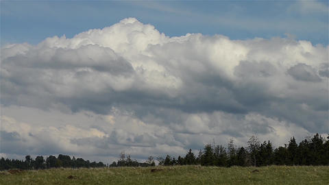 Rain clouds that have gathered over the fir forest 29 Footage