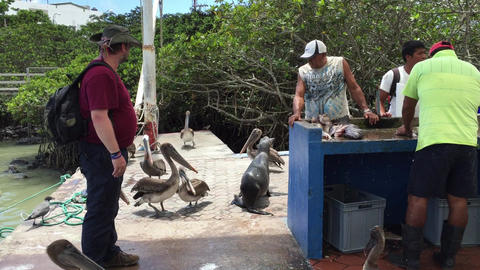 Galapagos Market with Sea lion Live Action