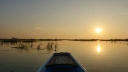 Sunrise in Morning on boat trip at pink lotus lake, Thailand ビデオ