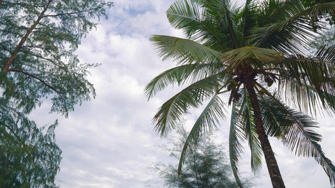palm tree on a tropical island GIF