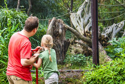 Father explaining daughter monkeys in the zoo Photo