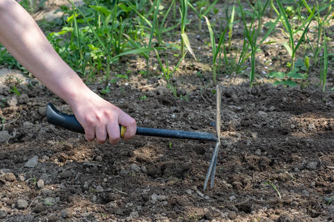 Hand works the soil with tool. Small gardening work tool fork Photo