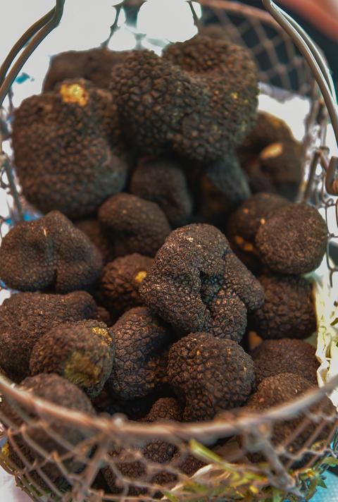 Fresh french black truffles in a basket, Perigord Fotografía