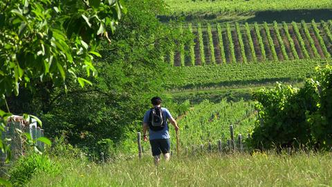Young man hiking, Male hiker walking in vineyard GIF