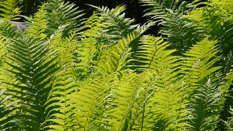 Close up green fern leaves in the wind GIF