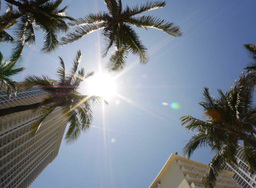 Miami Sun and Palm Trees Spin Footage