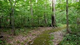 Walking Thru the Forest Steadicam Footage