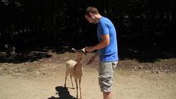 Feeding a Deer Footage