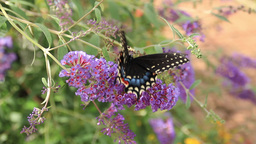 Butterfly on Flower Footage