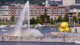 Rubber Duckie in Pittsburgh 3609 Footage