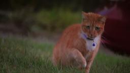 House Cat Stalks Prey 3654 Footage