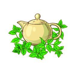 peppermint tea vector Vector