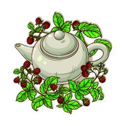 raspberry tea illustration Vector