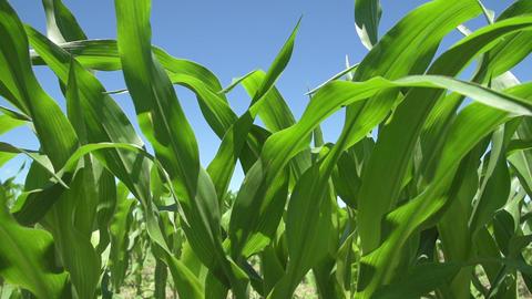 Farm Crops
