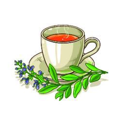 sage tea illustration Vector