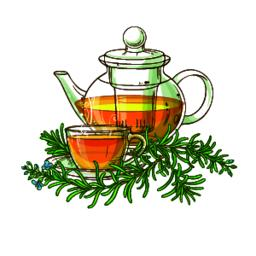 rosemary tea in teapot illustration Vector