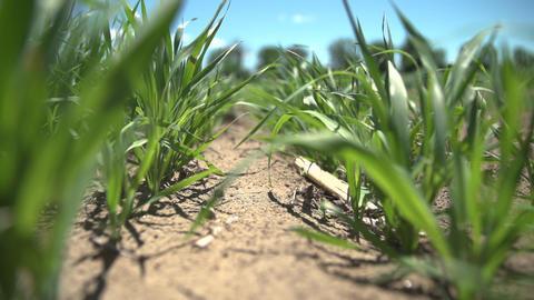 Farm Crops 0