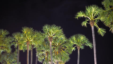 palms against the background of the night sky, tropical climate, travel and GIF